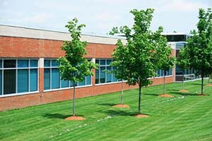School with nice trees
