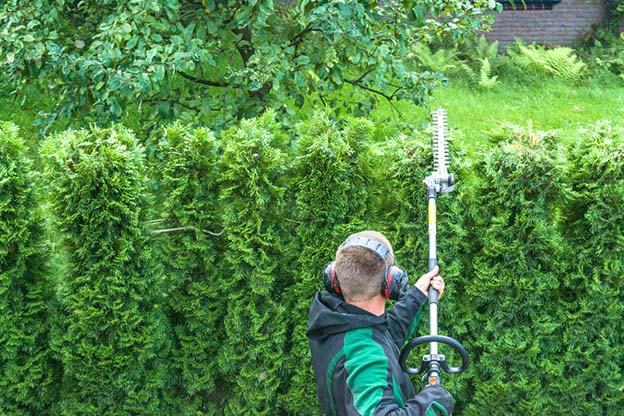 Hedge being trimmed