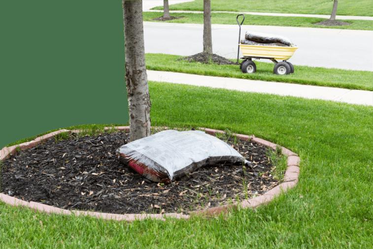 Mulch in a bag sitting beside tree