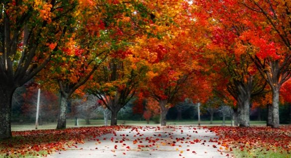 colorful trees red and orange in autumn