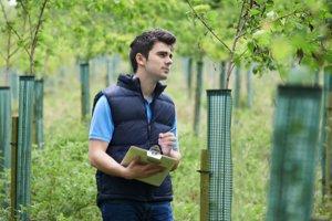 arborist inspecting a job