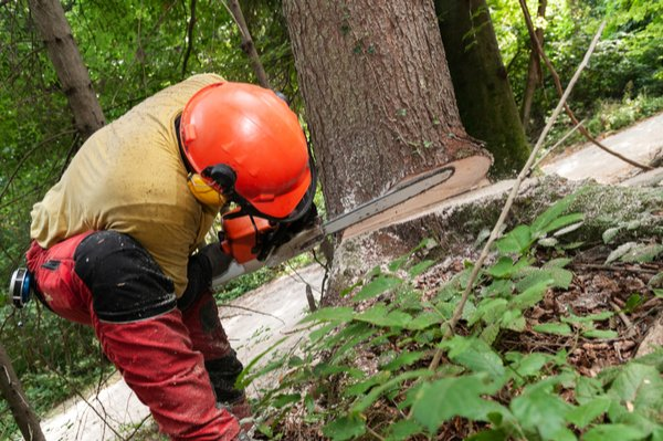 Croft Tree Experts arborist sawing base of tree during tree removal