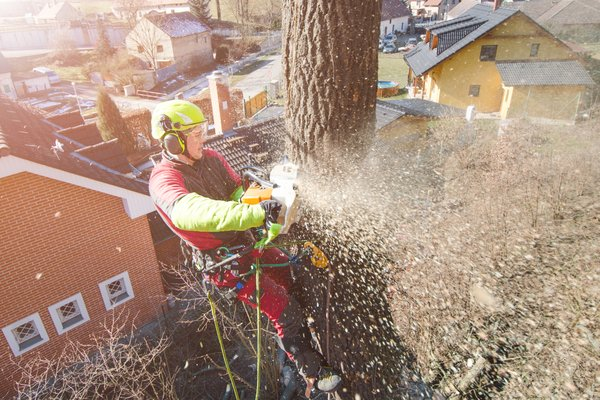Croft Tree Experts Arborist climbs high to remove section of tree
