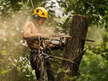 An Arborist Removing a dead tree