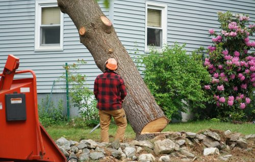 Staff supervising tree removal by Croft Tree Experts