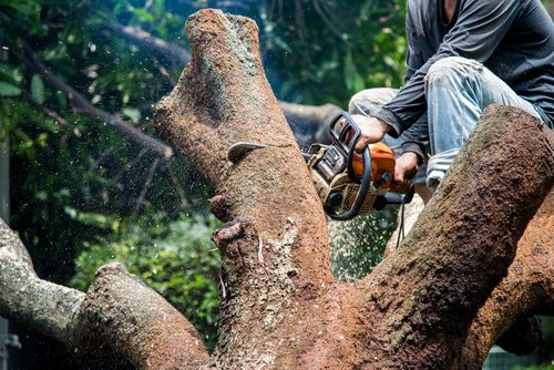 Cutting a tree with saw during tree removal by Croft Tree Experts