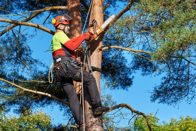 Arborist high in a tree trimming branches with a chainsaw.
