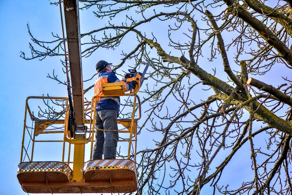 arborist trimming a tree with a boom lift