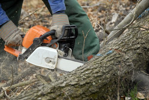 Croft Tree Experts arborist using saw to cut tree branches