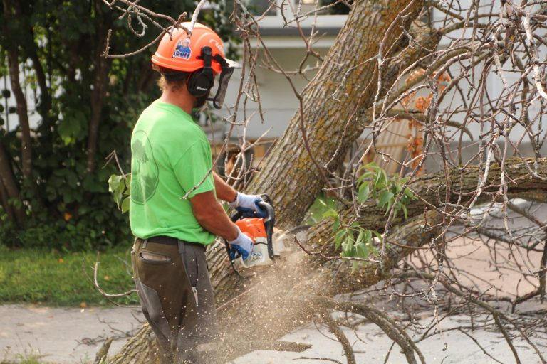 a professional arborist sawing down a tree