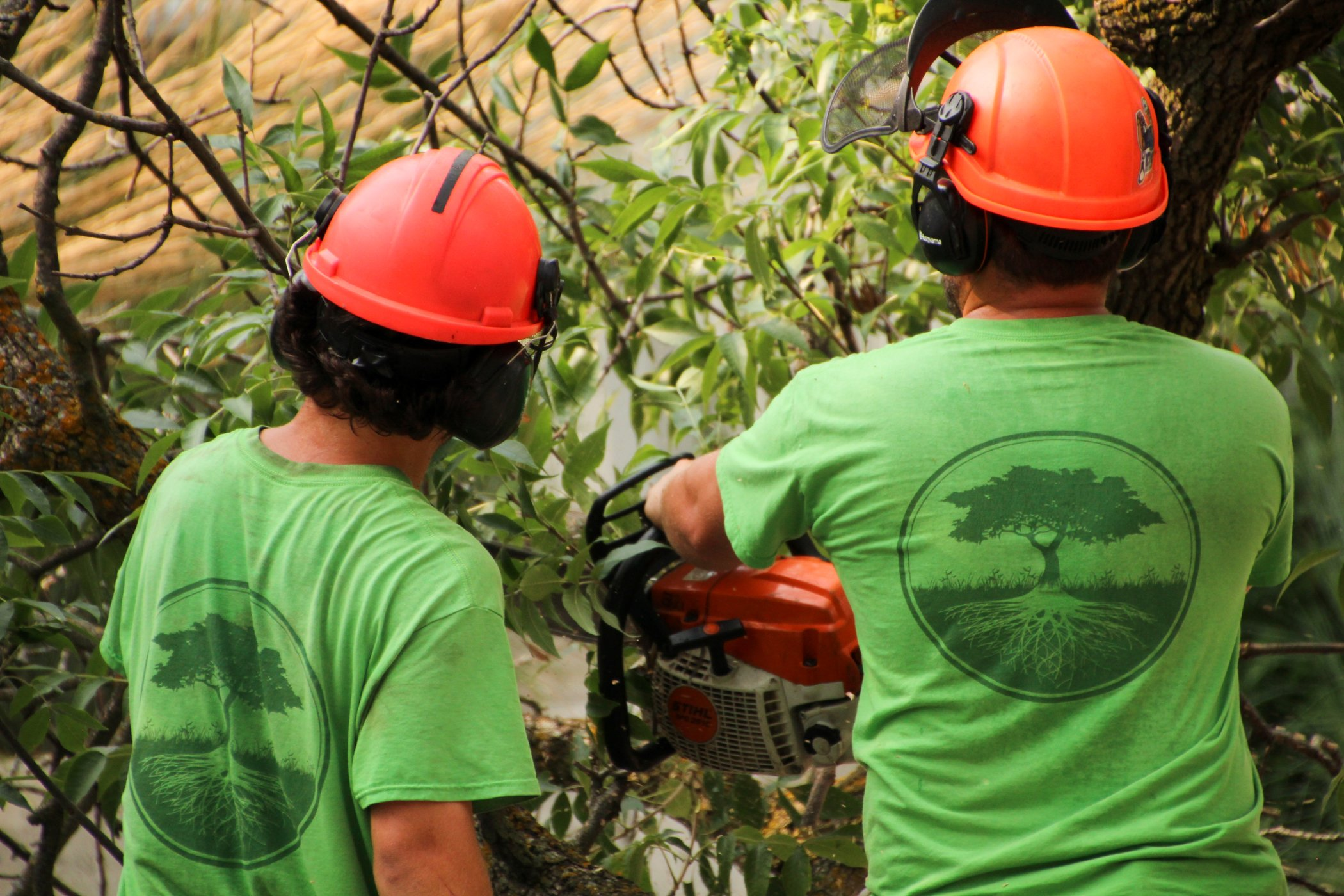 Two Croft Tree Experts Tree Removal Process