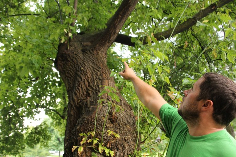 an arborist pointing at a section of the tree that needs to be removed