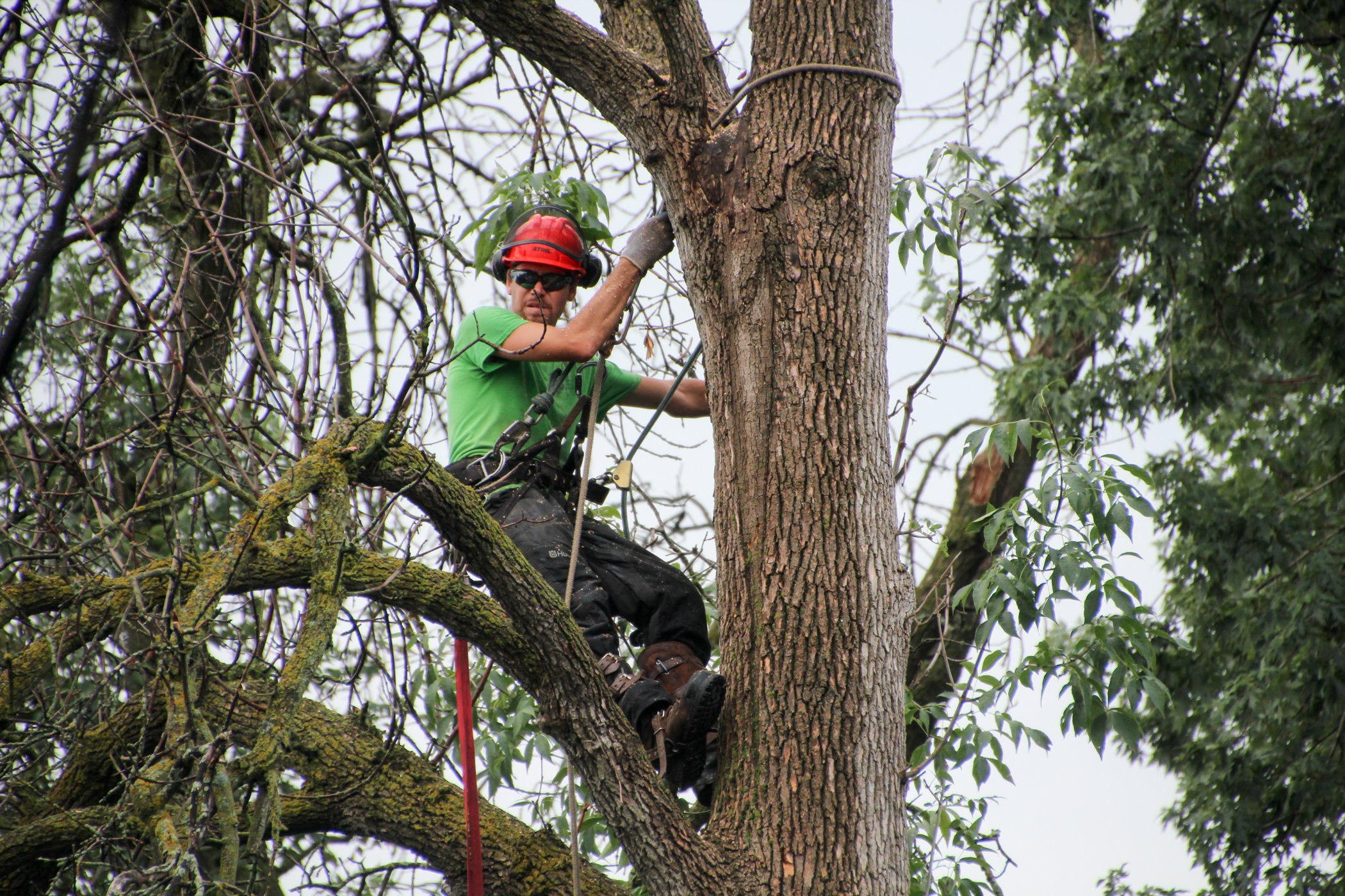 Tree Removal Specialist In A Tree To Remove It
