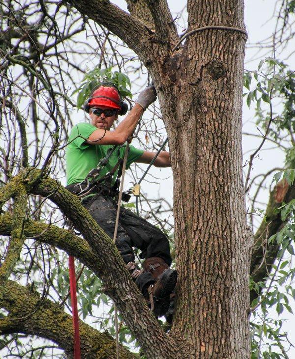 Tree Pruning & Trimming