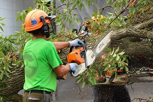 an arborist using a chainsaw to remove a branch