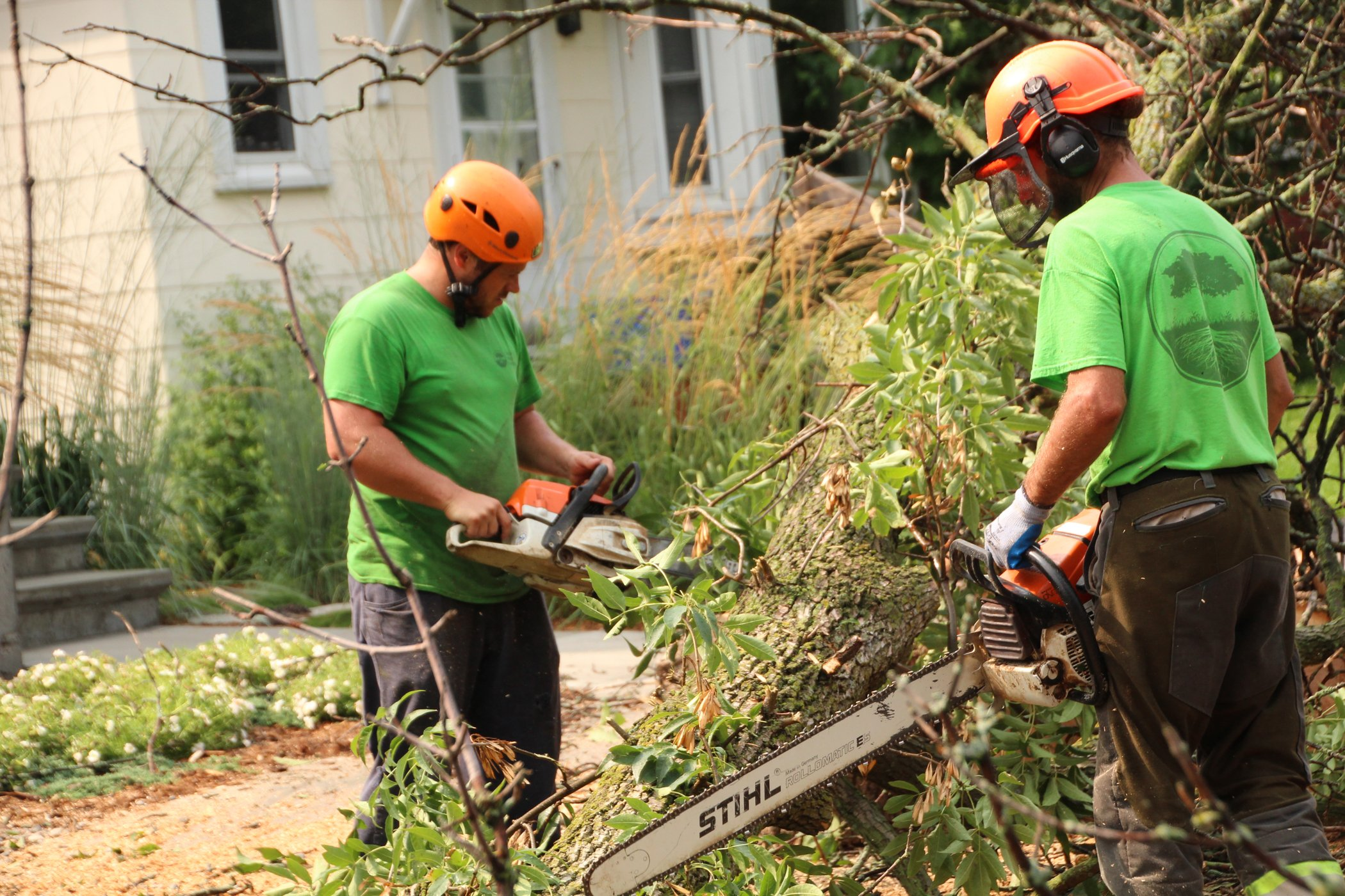 Tree Removal Experts At Base Of Tree To Remove Excess Branches