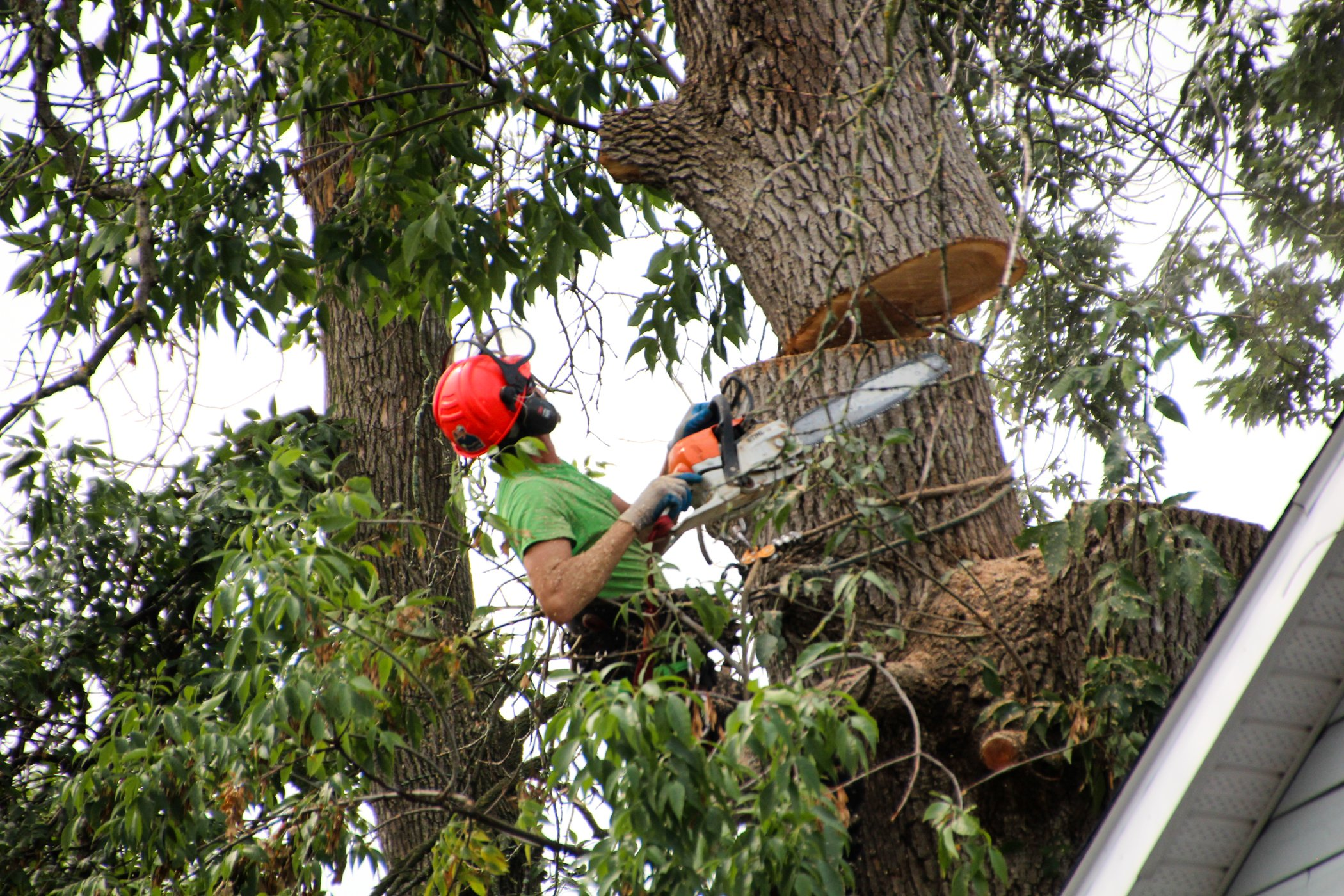 Croft Tree Removal Expert In Tree Cutting Upper Portion Down