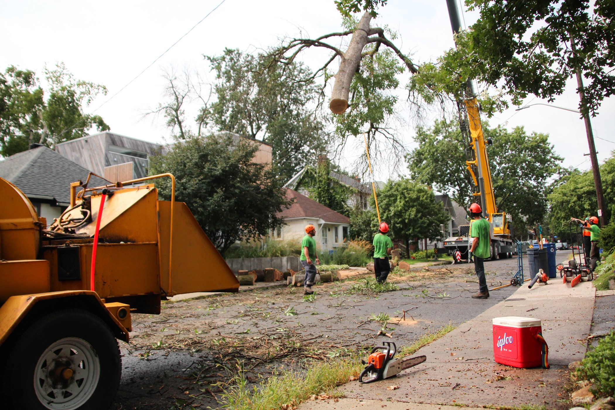 Tree Removal Procedure On Residential Property