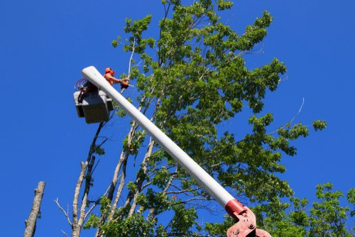 How to Choose a Tree Trimming or Tree Removal Service in Ottawa | Croft  Tree Experts
