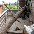 tree collapsed into house