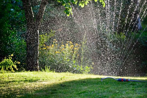sprinkler on lawn watering trees
