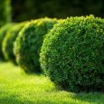 neatly trimmed hedges make landscape look great