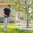 man watering tree in yard