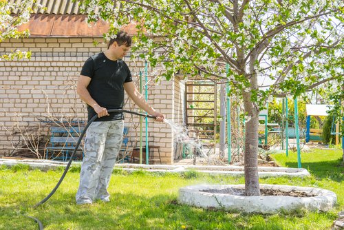man watering tree in yard