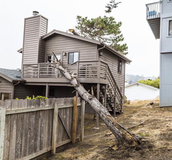 Dead tree fallen on neighbours balcony needs emergency removal.