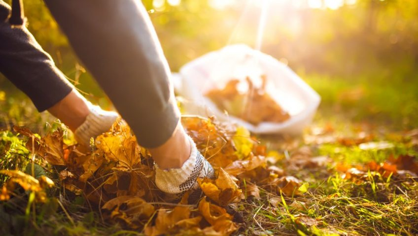 woman picking up leaves off lawn in autumn.