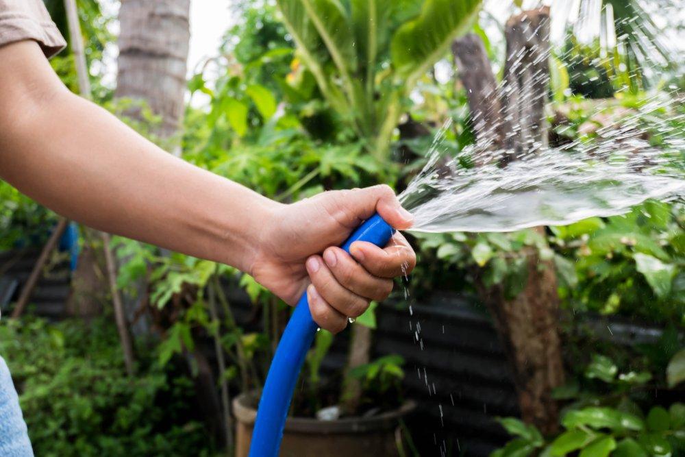 watering plants & trees