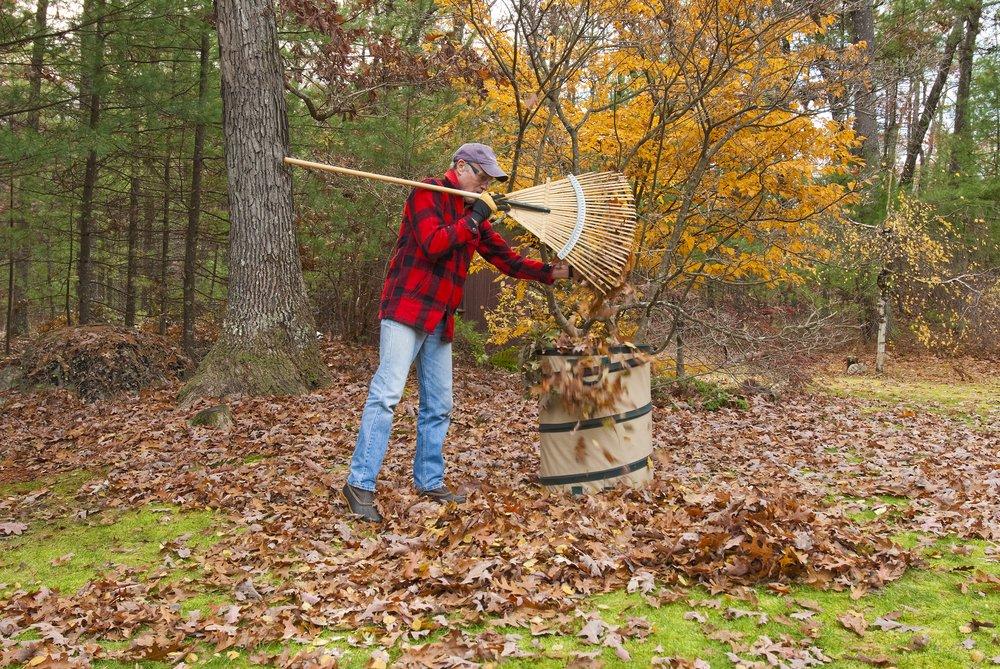 man raking lawn near tree