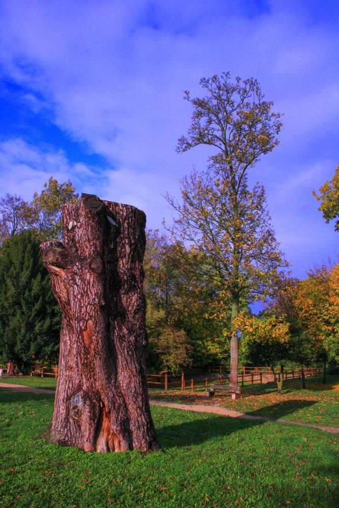 tree trunk cut in autumn