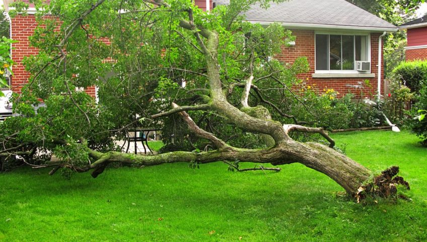 Large tree fallen in the back yard of an Ottawa house.