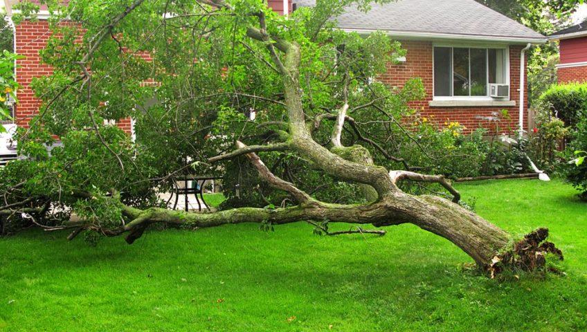 tree fallen on front yard near house