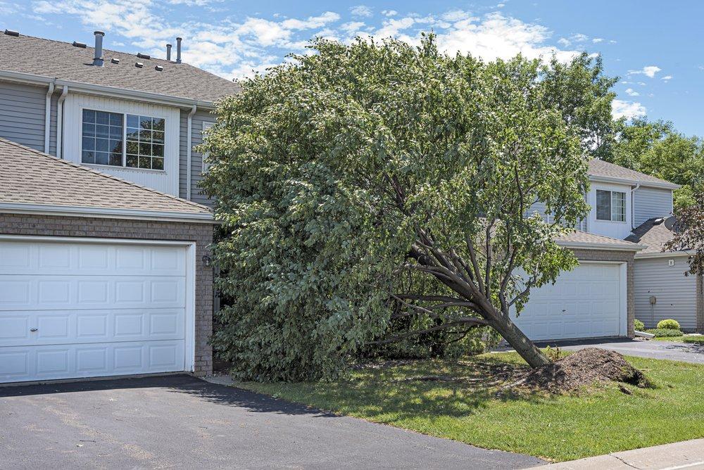 tree fallen in between houses