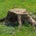 barren tree stump near house