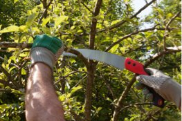 tree pruning with a hand saw