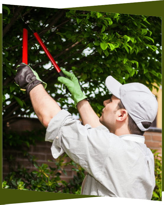 a man pruning a tree with hedge trimmers