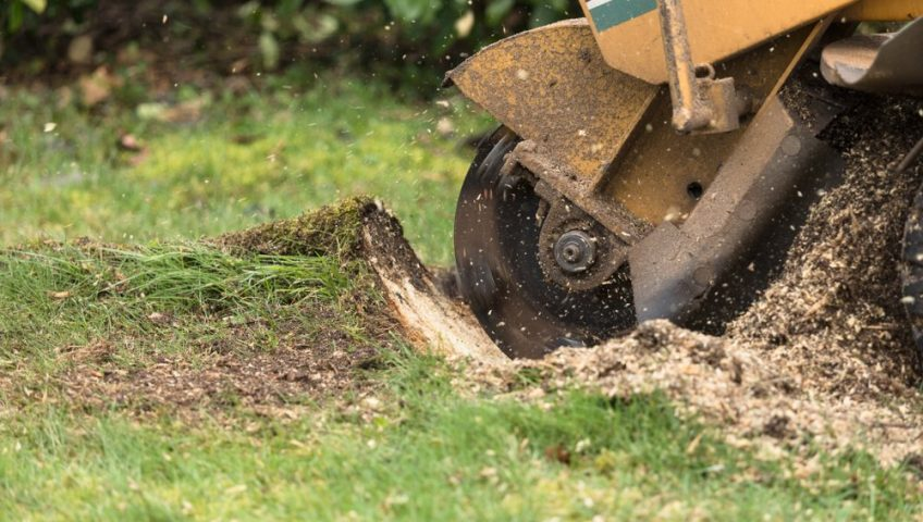 A stump grinder being used for stump grinding services.