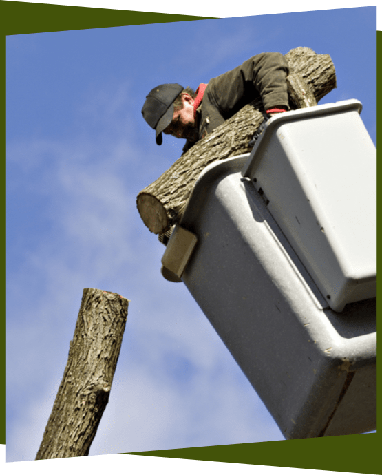 arborist in lift cutting tree