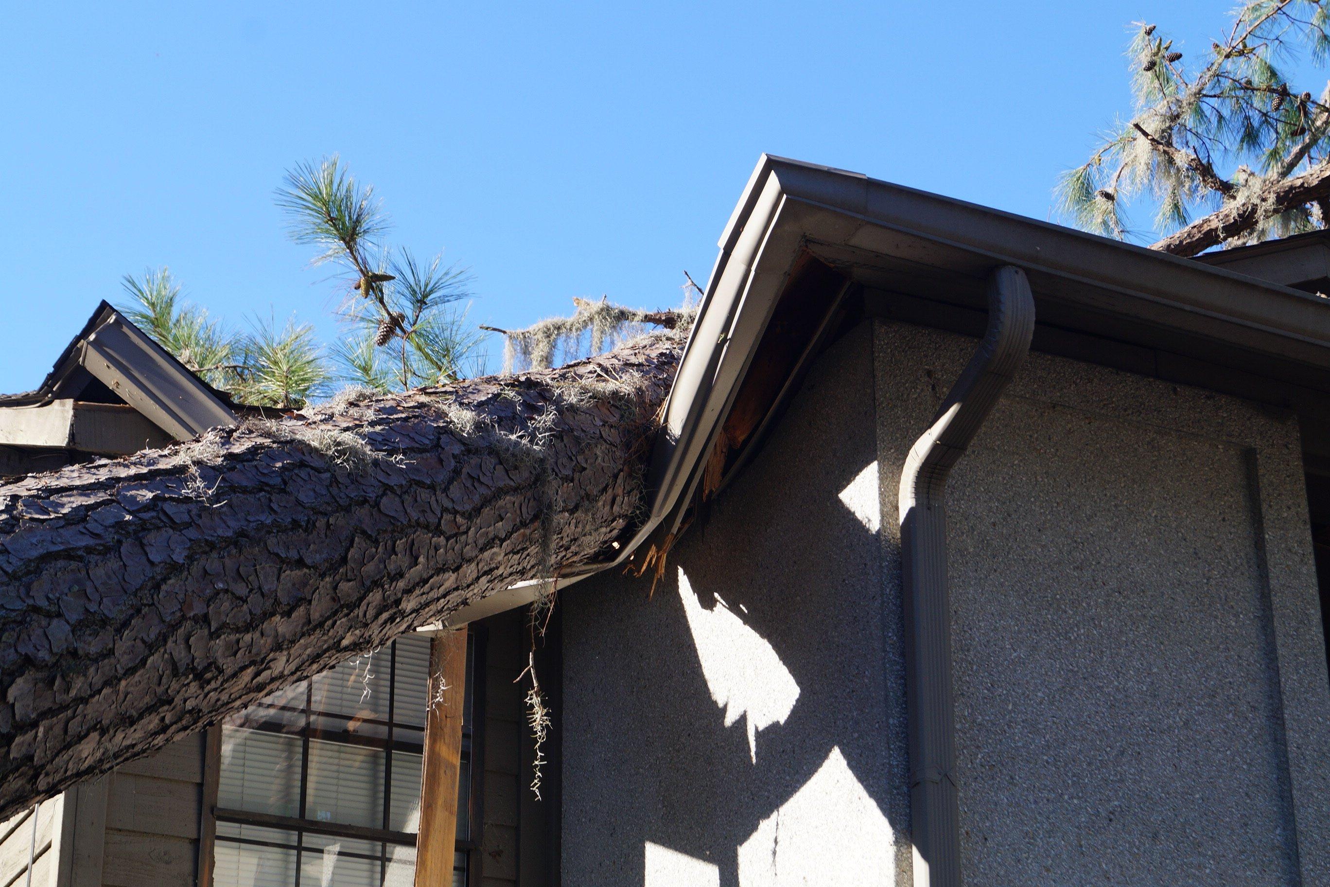 Fallen tree on an Ottawa house needs emergency removal.