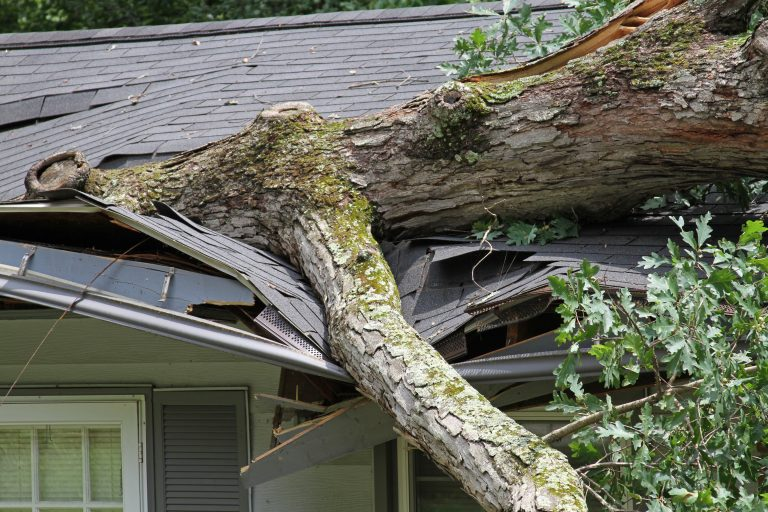 Fallen tree on a collapsed roof needs emergency removal.