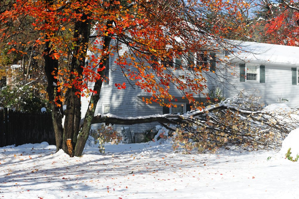 Tree limb fallen in a yard during autumn with snow on the ground in Ottawa.