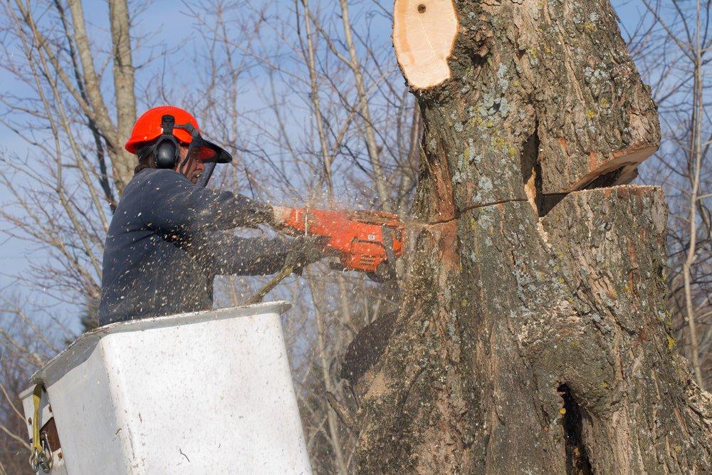 arborist cuts tree