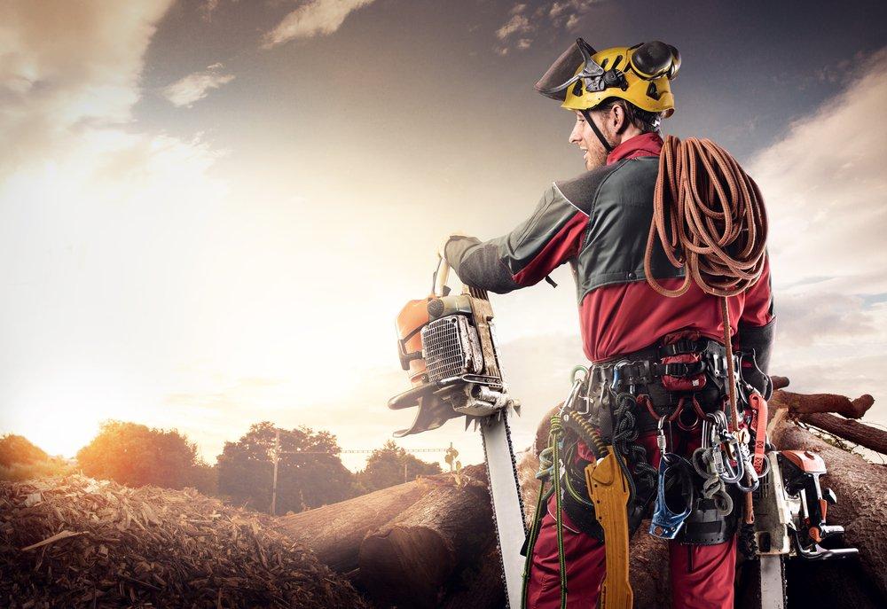 arborist providing tree care service