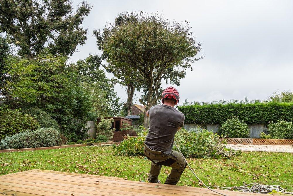 arborist removing a tree