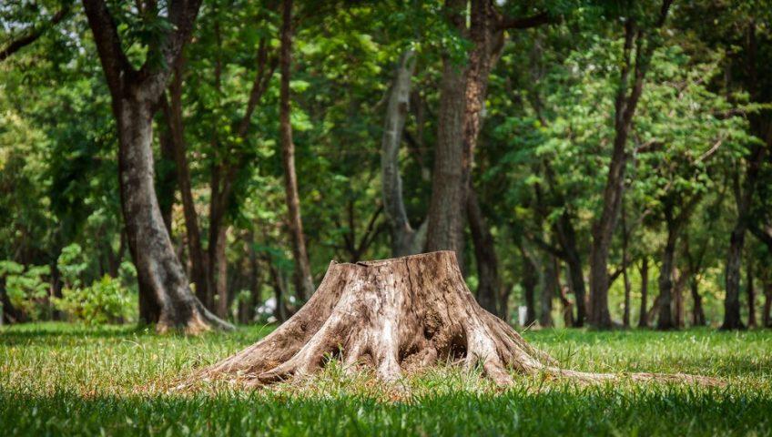 tree stump eyesore in yard
