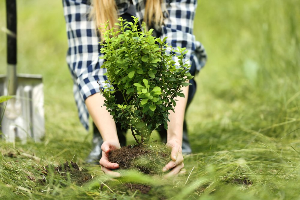 woman in plaid planting a tree