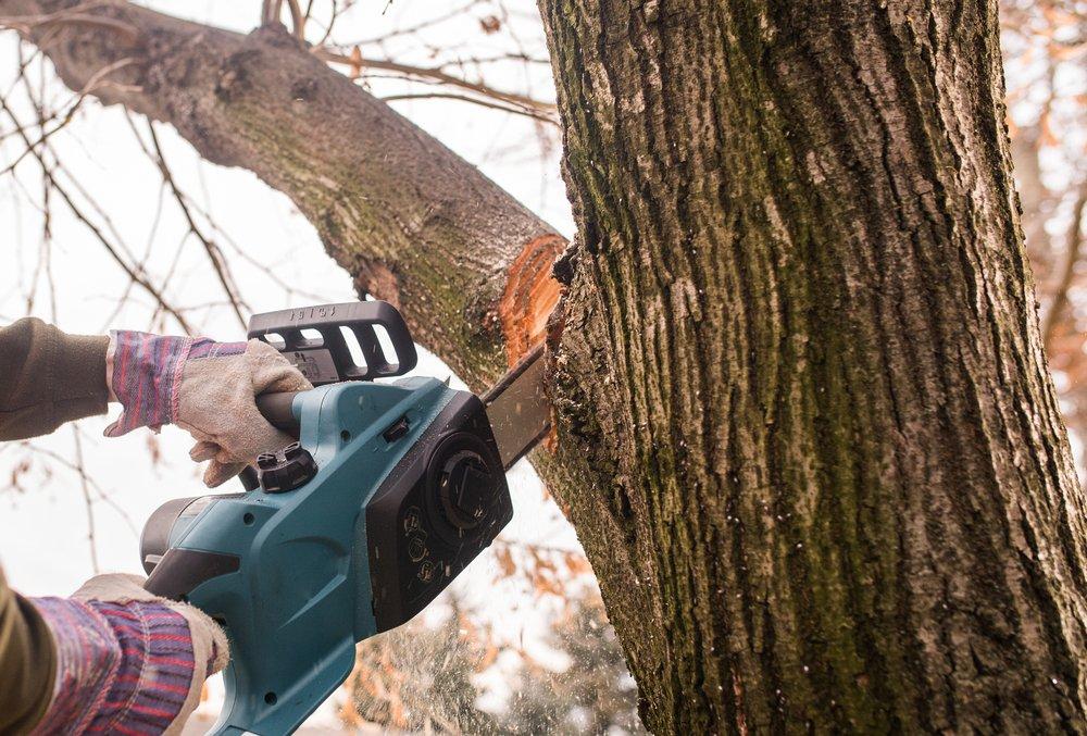 arborist felling a tree